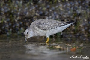 knot bridlington 1